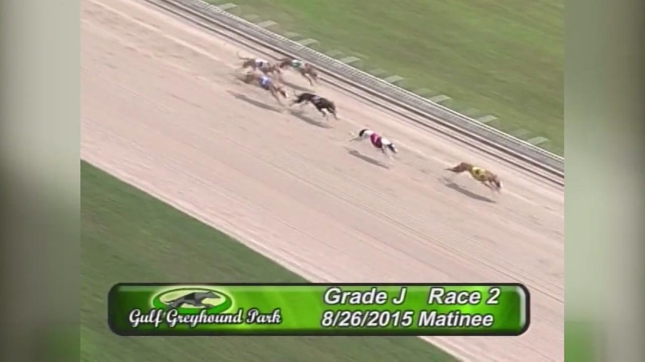 Dog racing returns to Gulf Greyhound Park