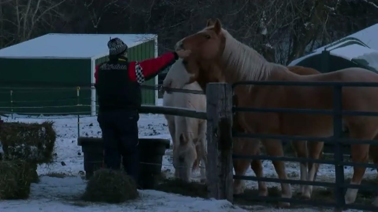 Animals killed in barn fireNew Keyword
