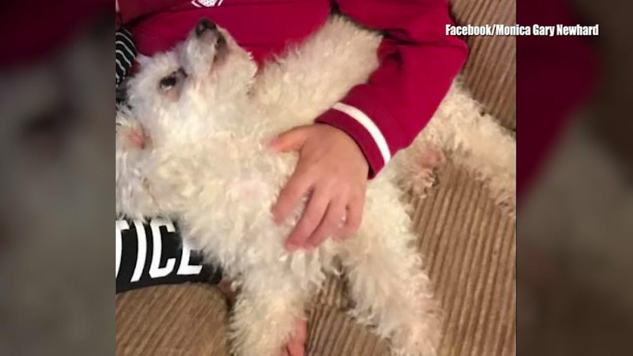 Dog reunited with family after eagle attack