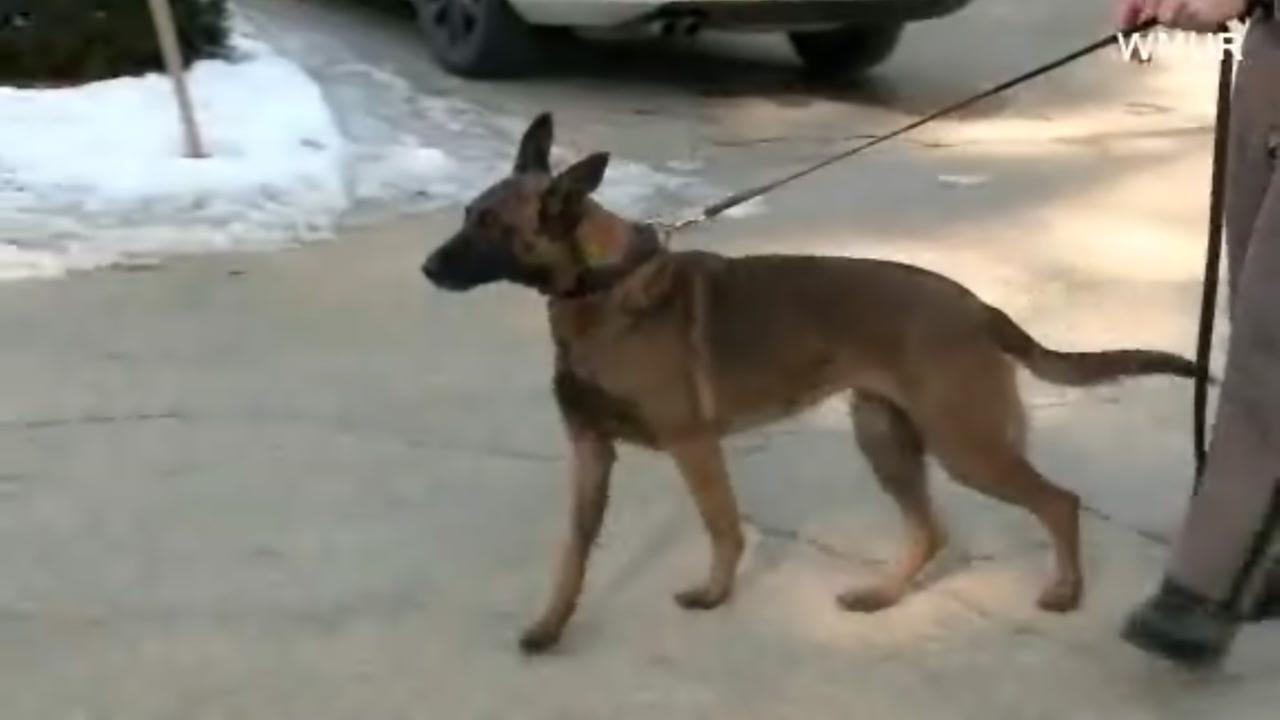 K9 officer recovering after being bitten by suspect