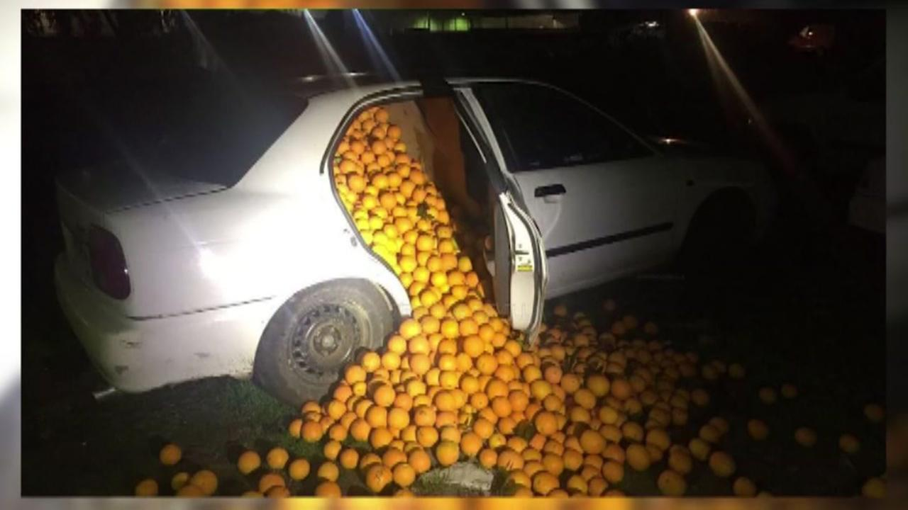 9000 pounds of oranges found in cars