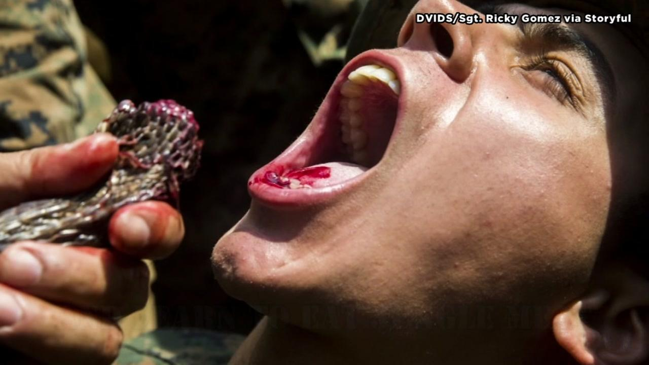 Marines drink cobra blood during survival training