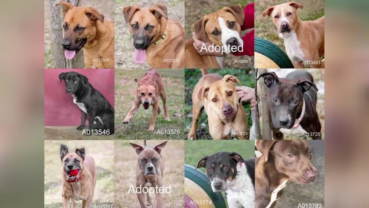 Free adoptions at over crowded Fort Bend animal shelter