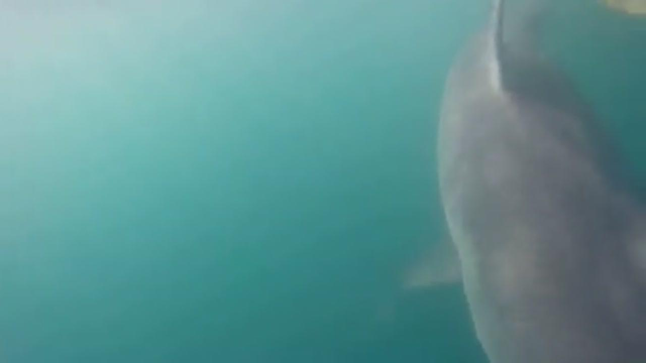 3,000 pound Great White Shark caught off Hilton Head