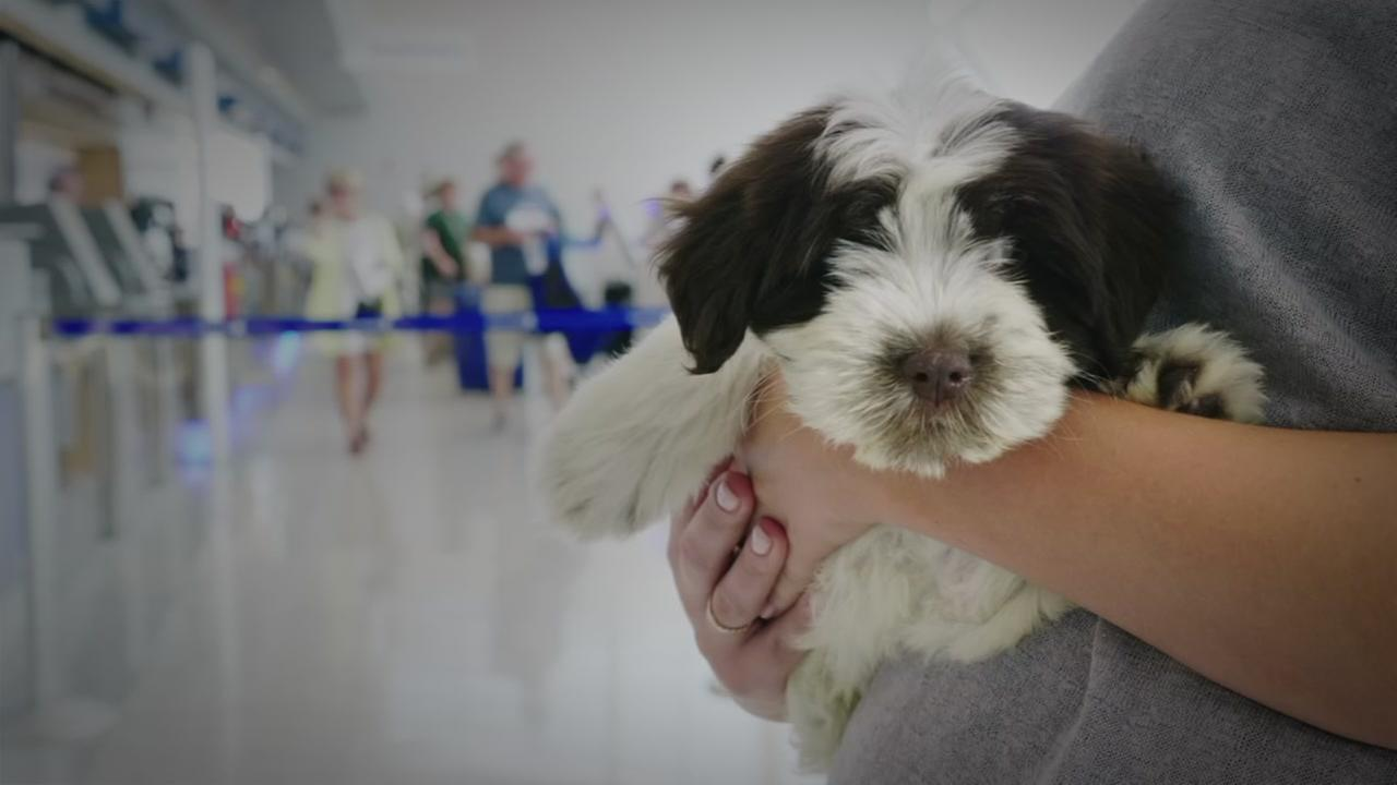 Major airlines pet policies