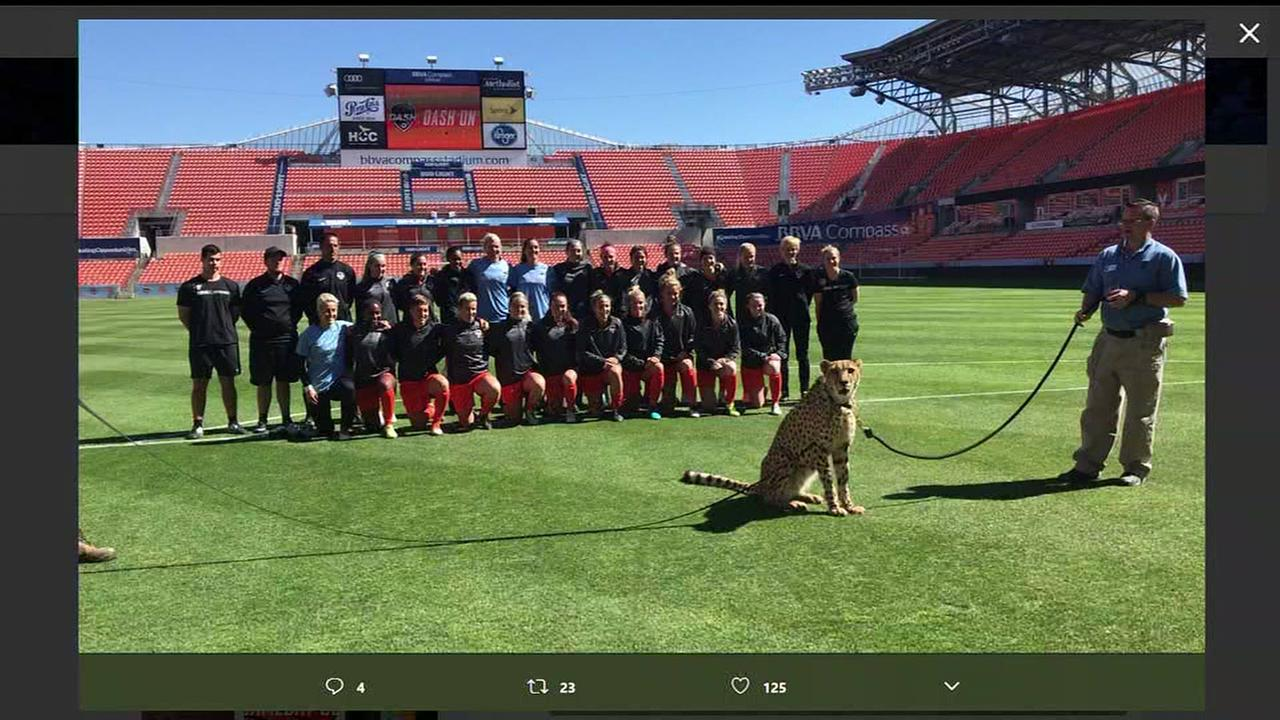Houston Dash enlist live cheetah to be part of team photo