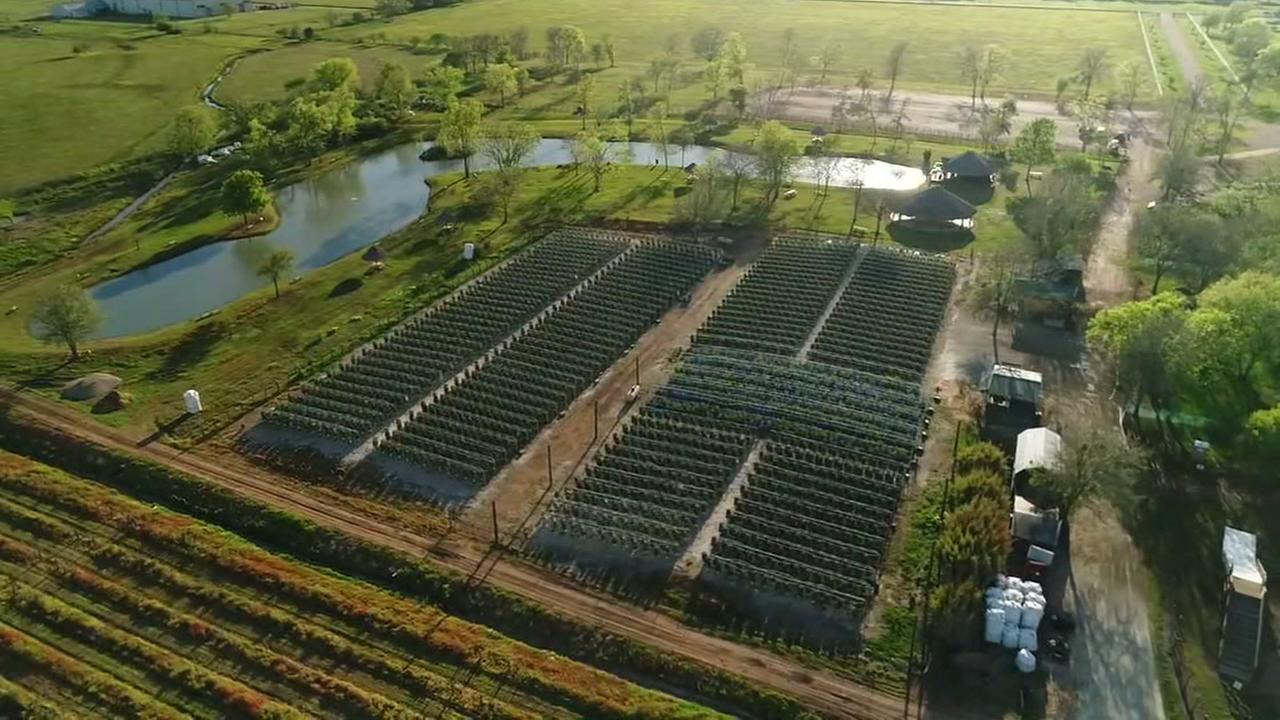 Drone footage of Blessington Farms