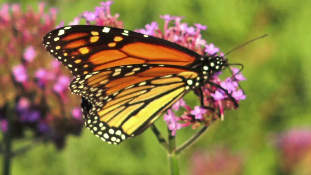 Pollinators garden