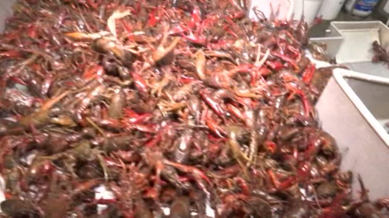 400 pounds of crawfish stolen from truck