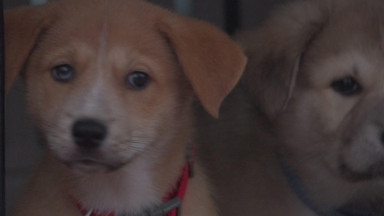 BARC animal shelter reopens after distemper outbreak