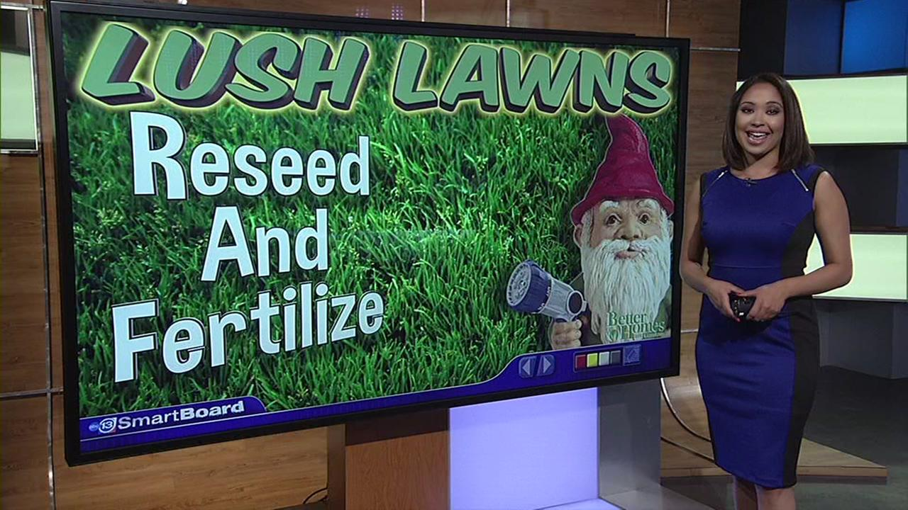 Tips for a lush lawn