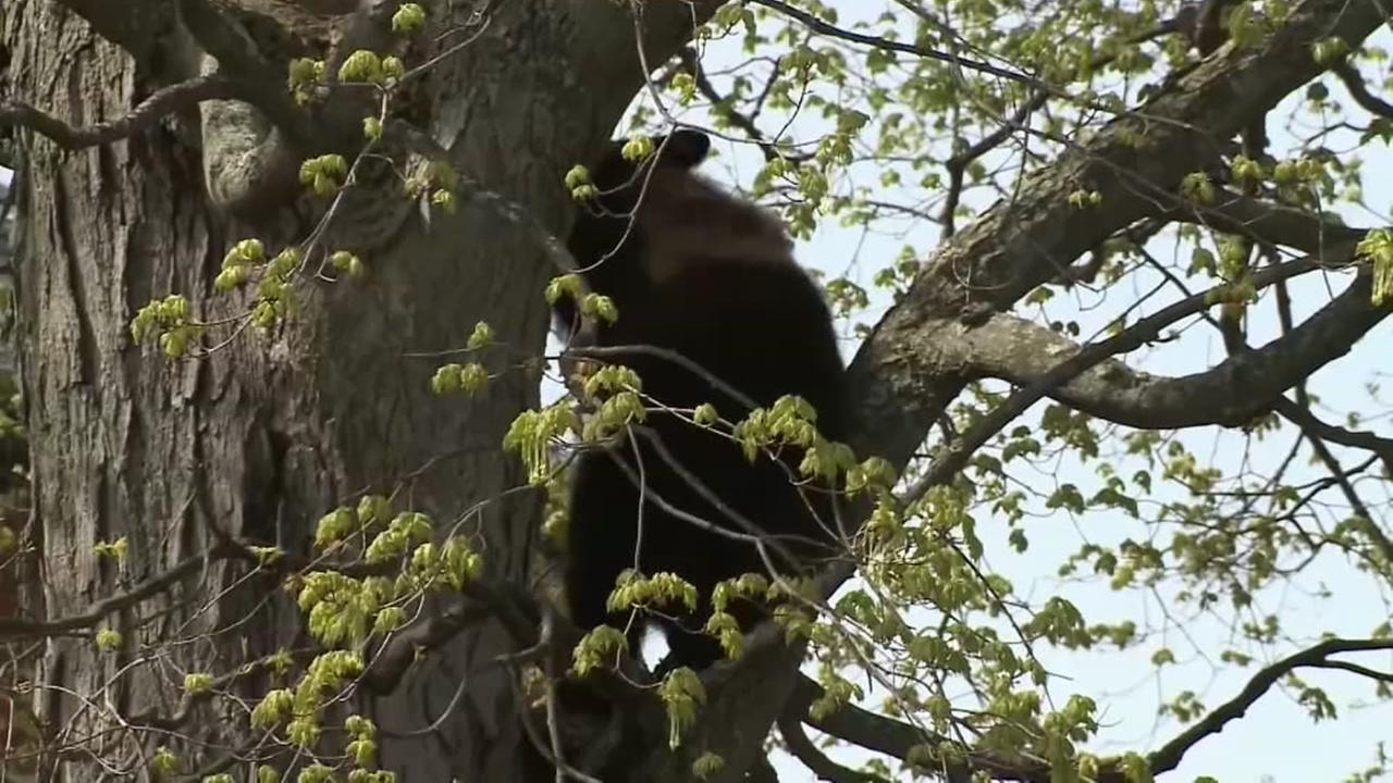 A school gets an unexpected playground visitor, a black bear