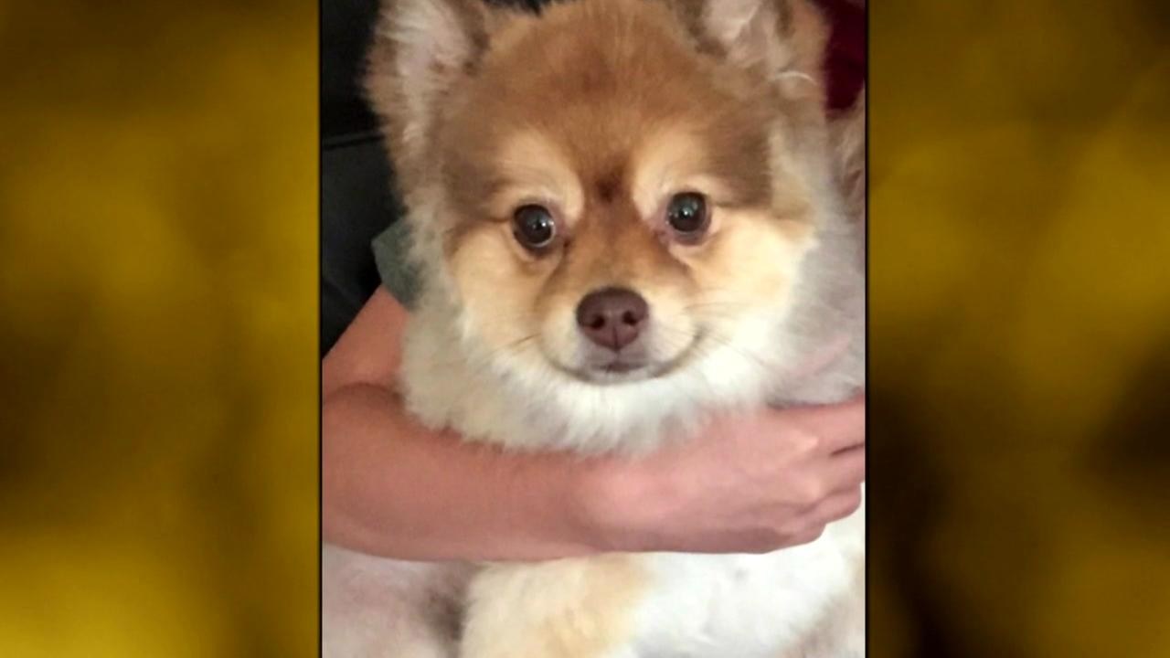 Family demands answer after dog dies on Delta flight