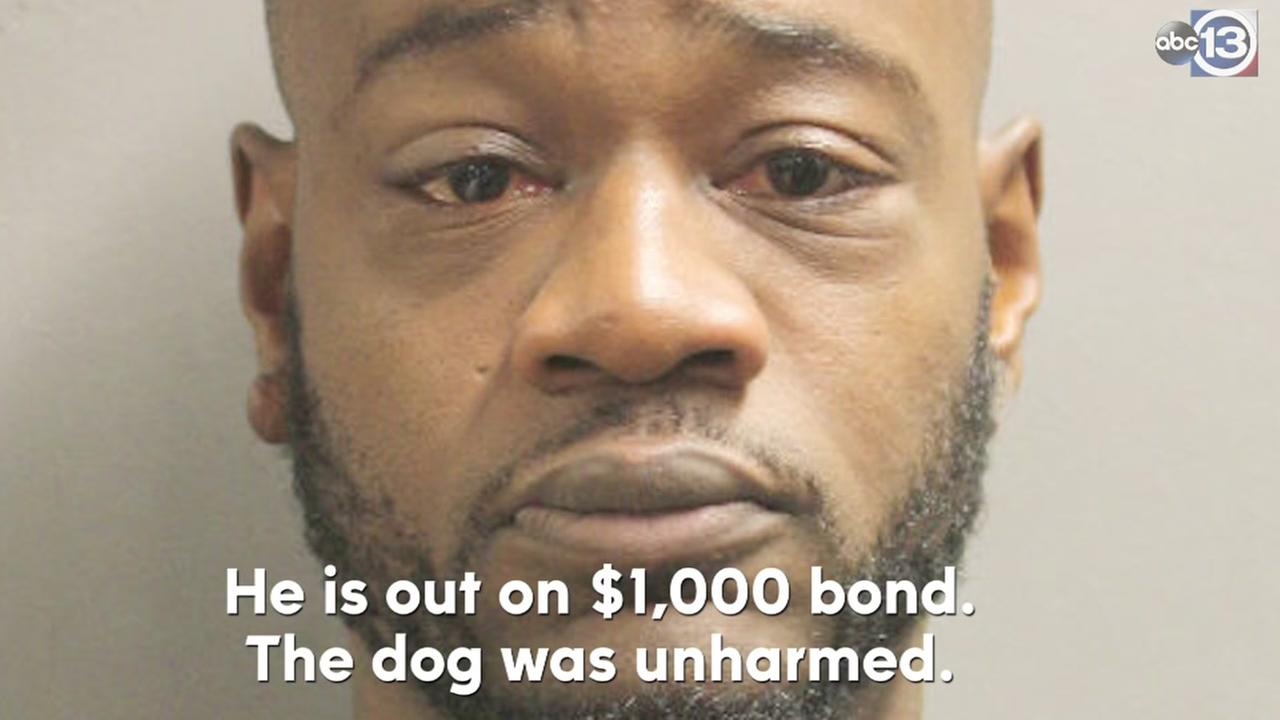 Man allegedly left dog in car while at the movies