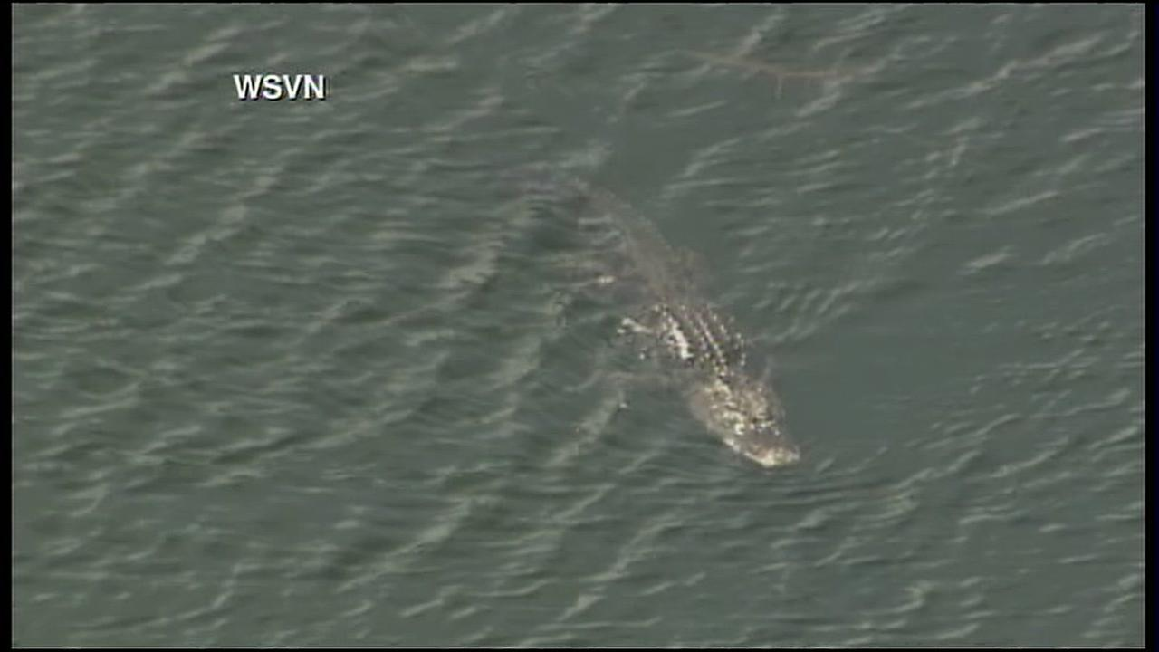 Authorities search alligator-infested water for missing woman