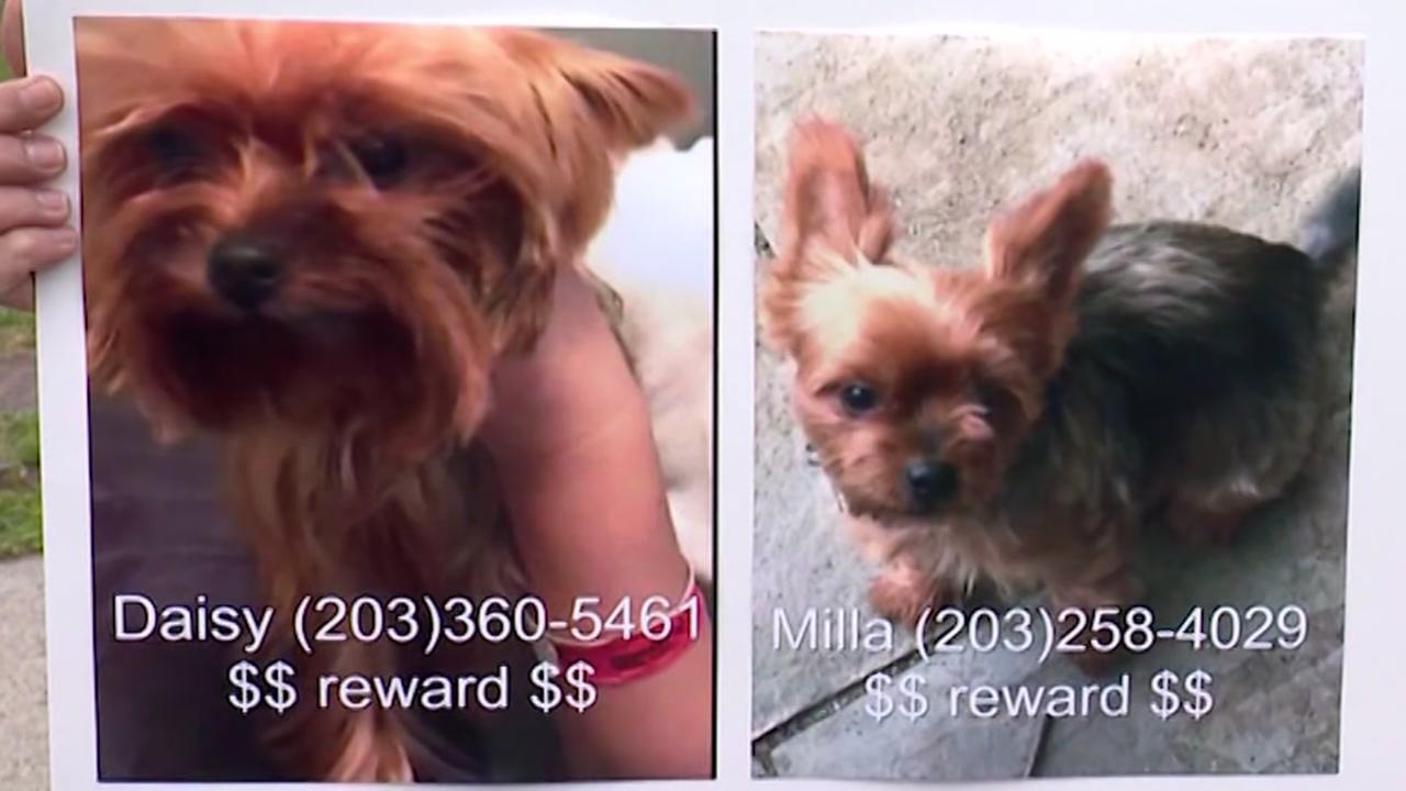 Police warn of pedigree dog thefts
