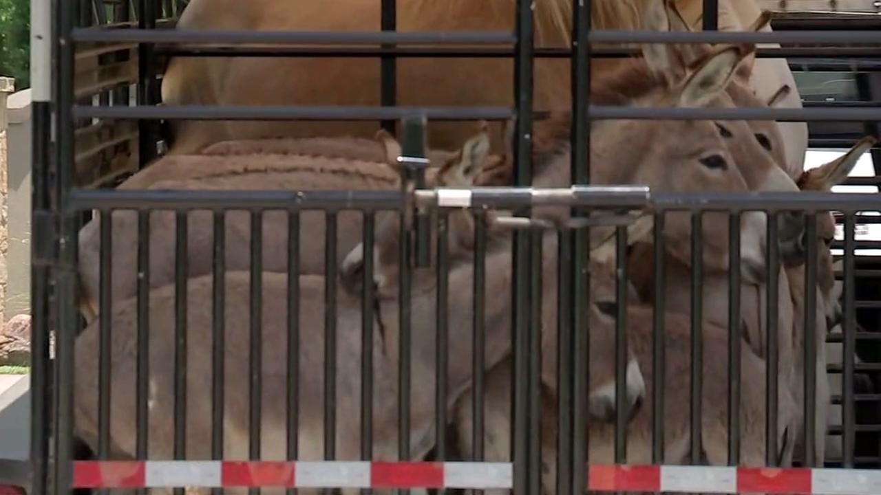 More than 70 animals seized