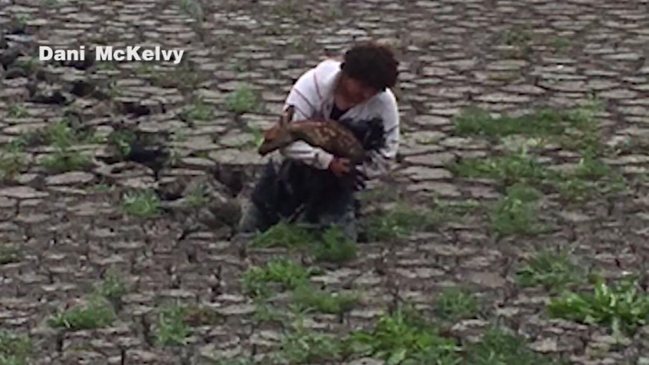 Man wades through poop to save fawn