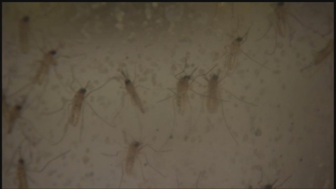 West Nile virus cases increase in Houston, Harris Co.