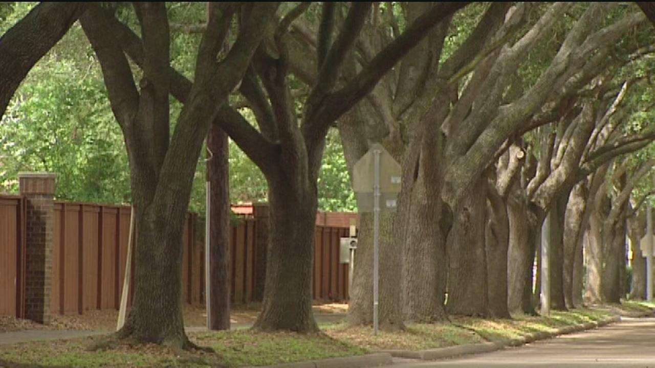 Sugar Land Residents Fight To Save Trees Lines Along Edgewater Drive In First Colony