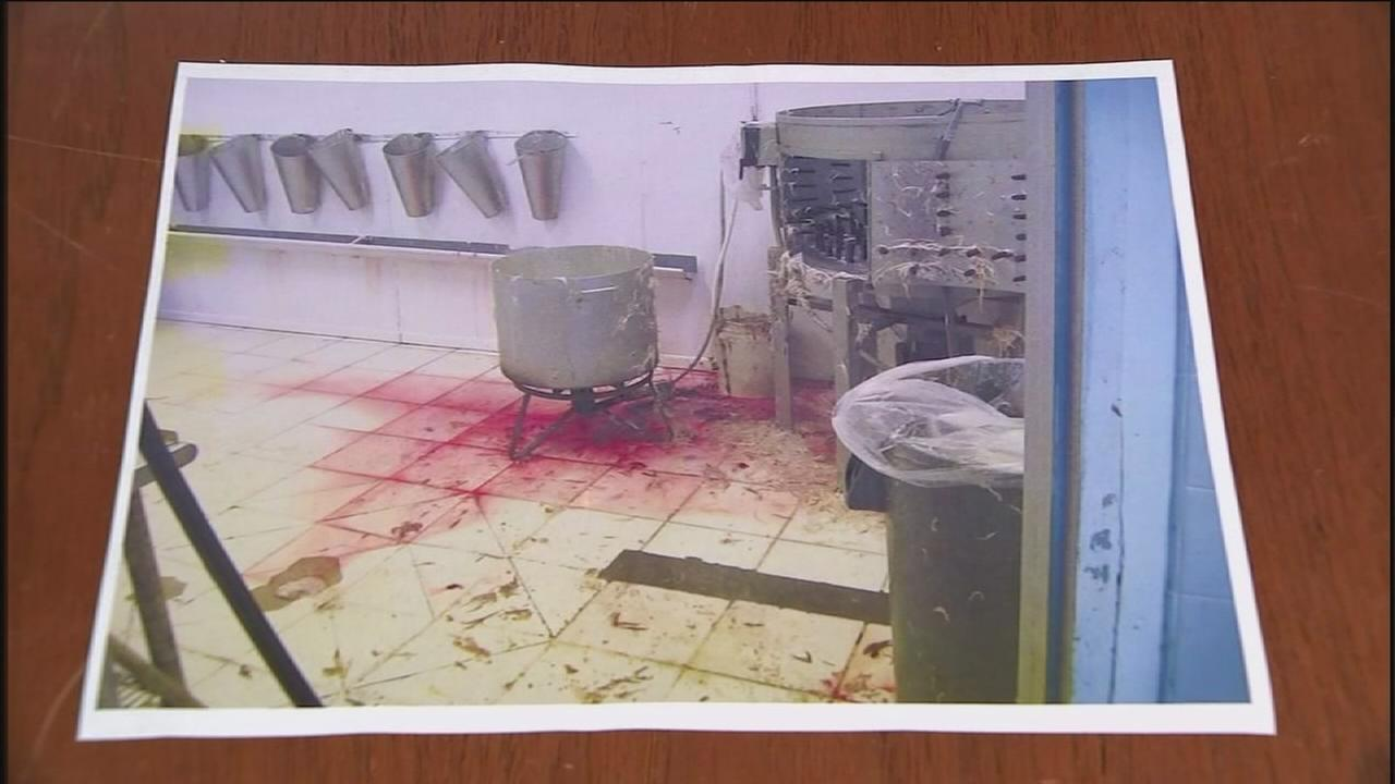 Suit: Slaughterhouse improperly stores animal parts