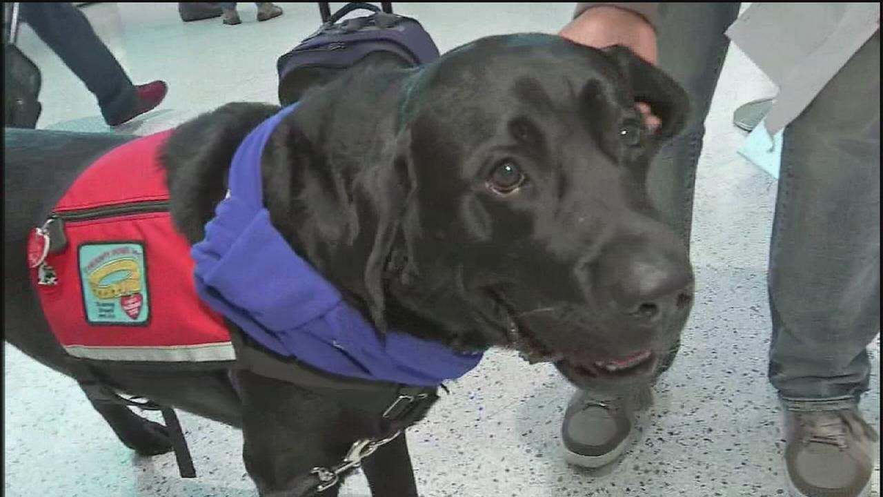 Comfort dogs may make air travel easier