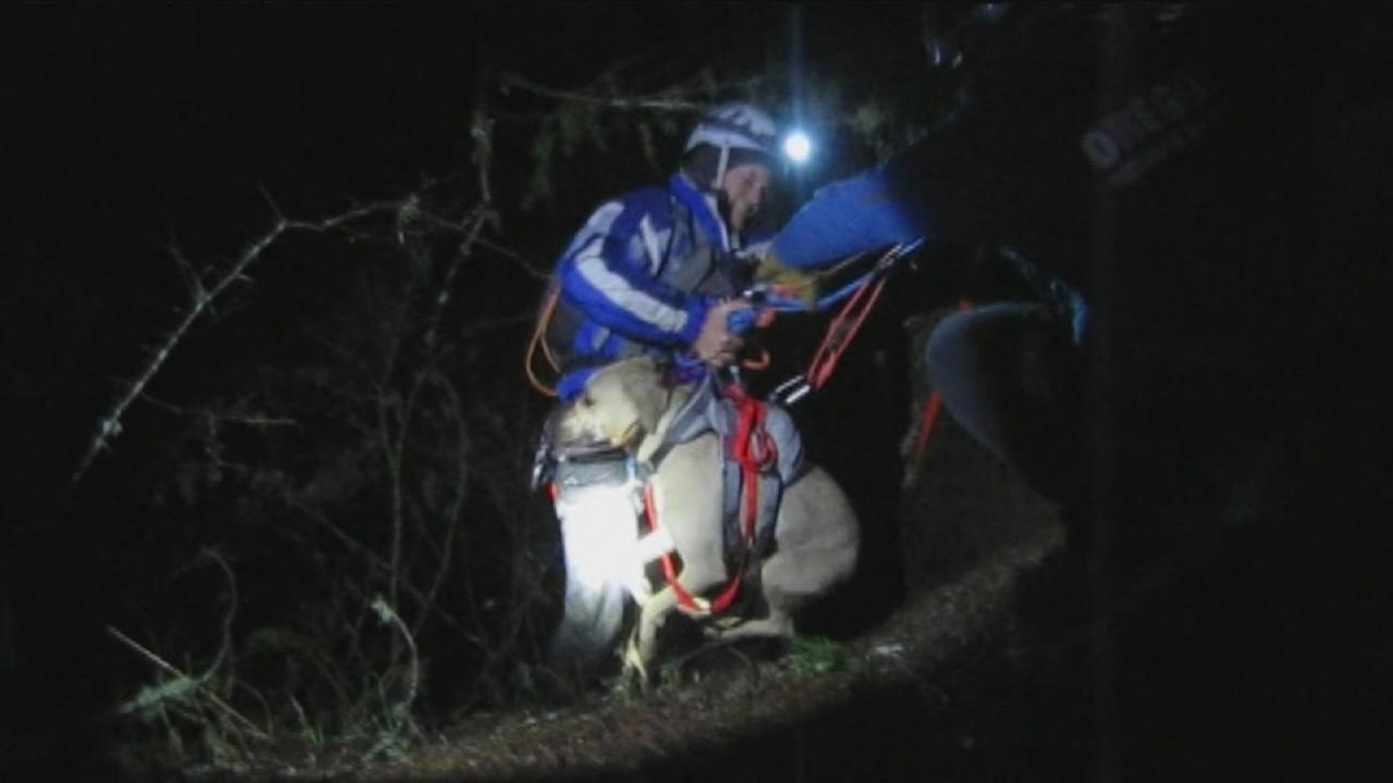 Dog rescued from ravine