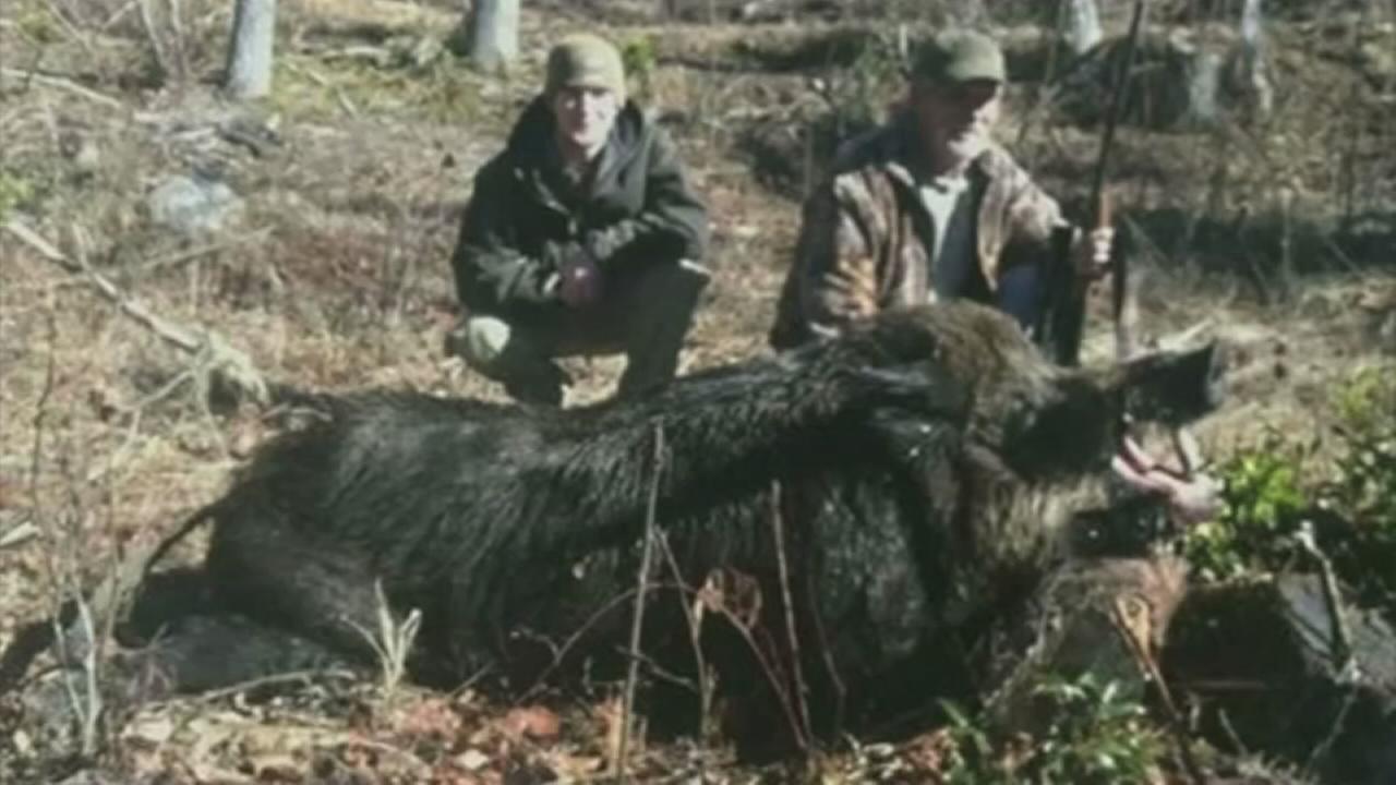 Giant 707lb hog killed