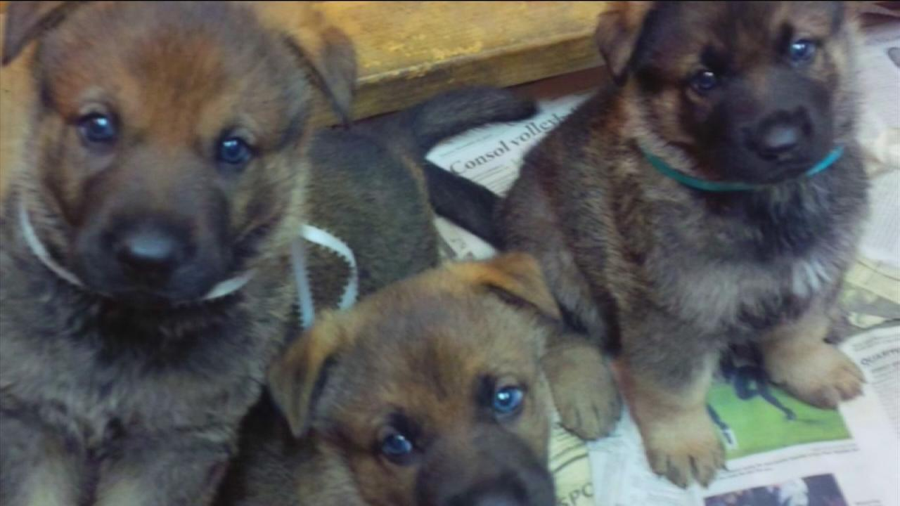 Puppies stolen during theft in Hedwig Village