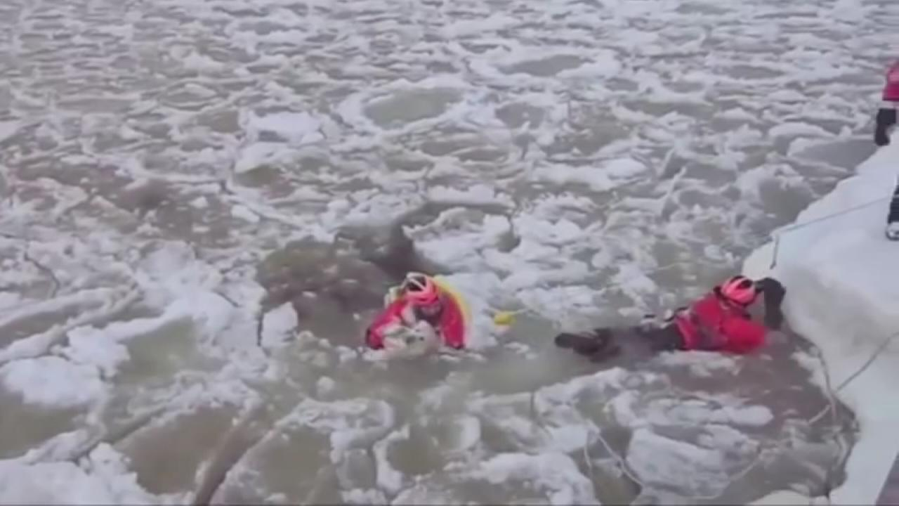 Coast Guard rescues dog from icy water