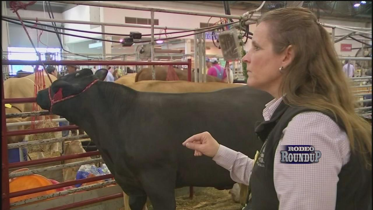 Vets on standby to care for rodeo animals