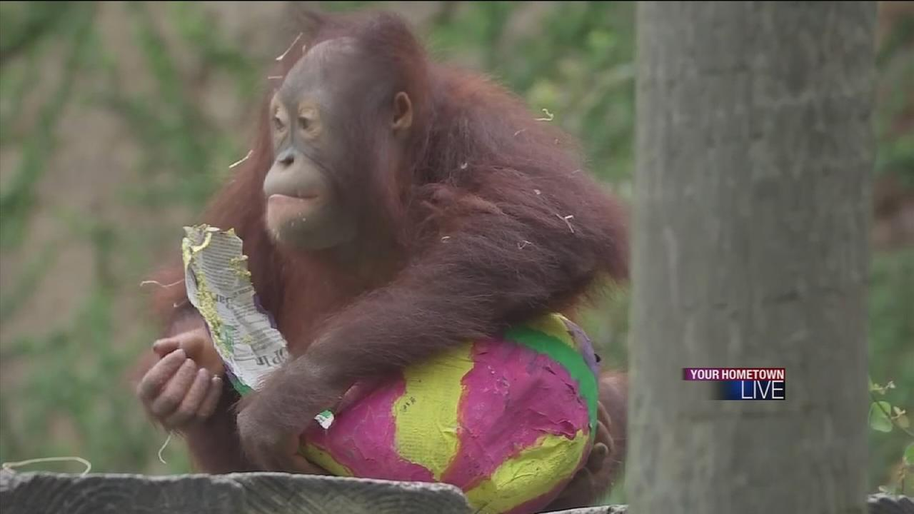 Easter eggs hunt at the Hoston Zoo