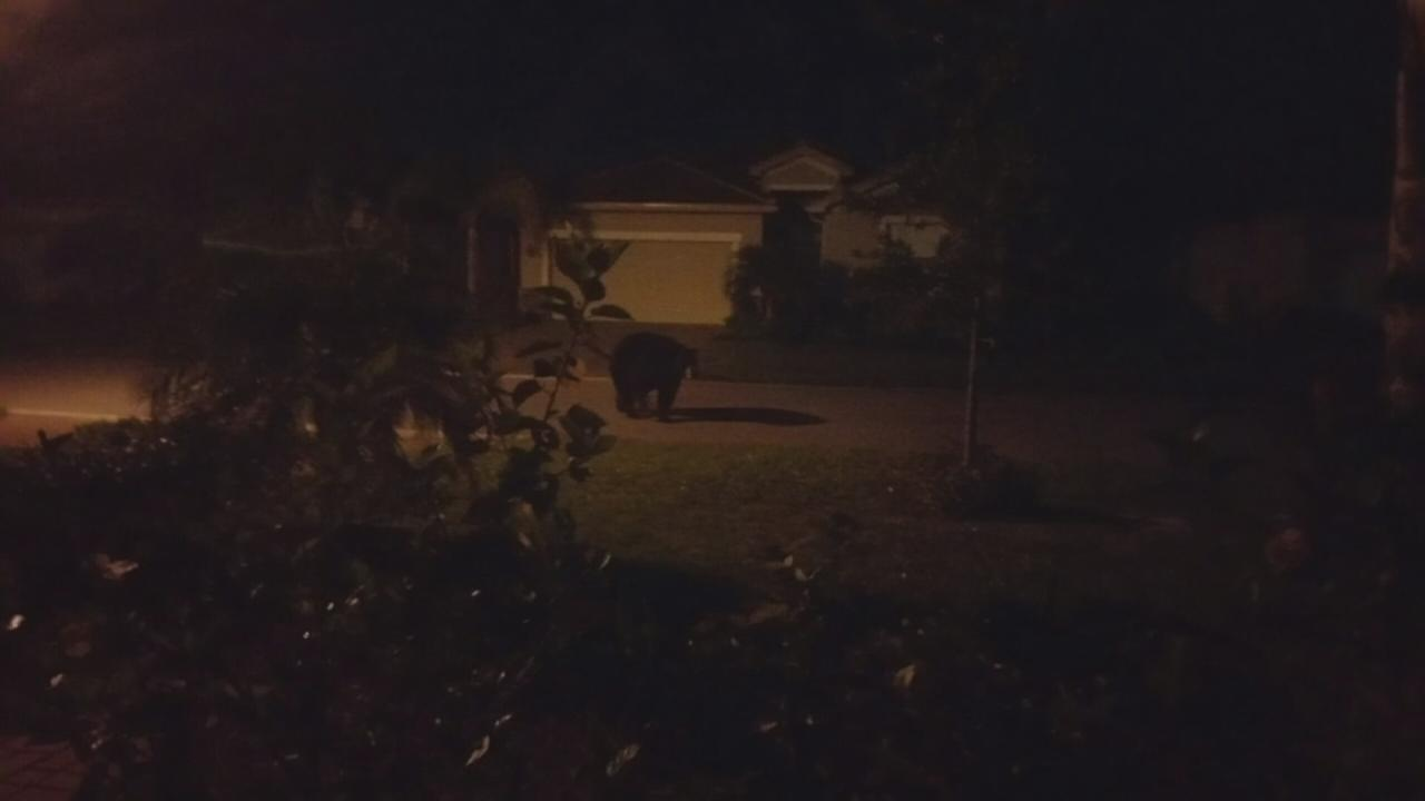 Bear breaks in, steals Easter candy