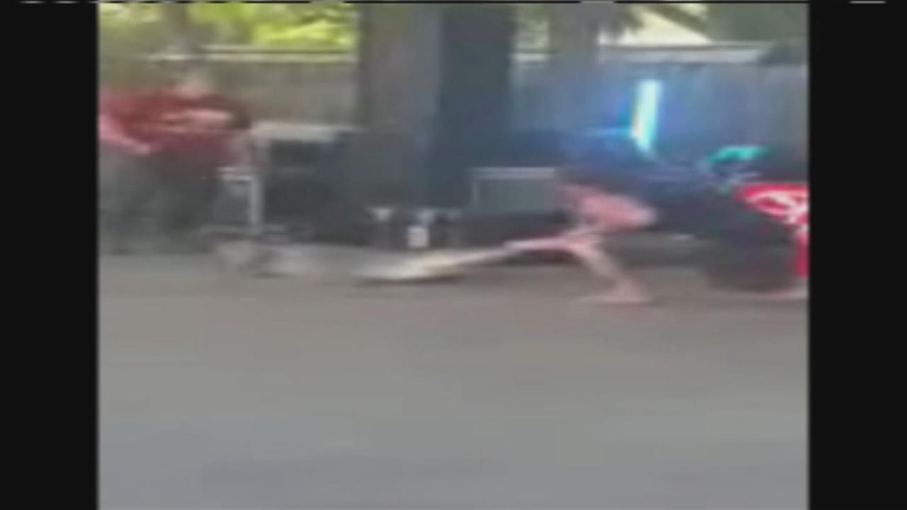 Alligator bites man at festival