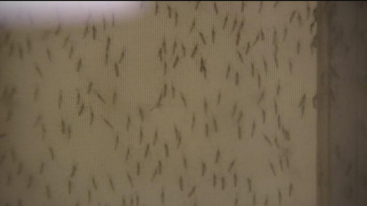 Warm weather, rain means mosquito season