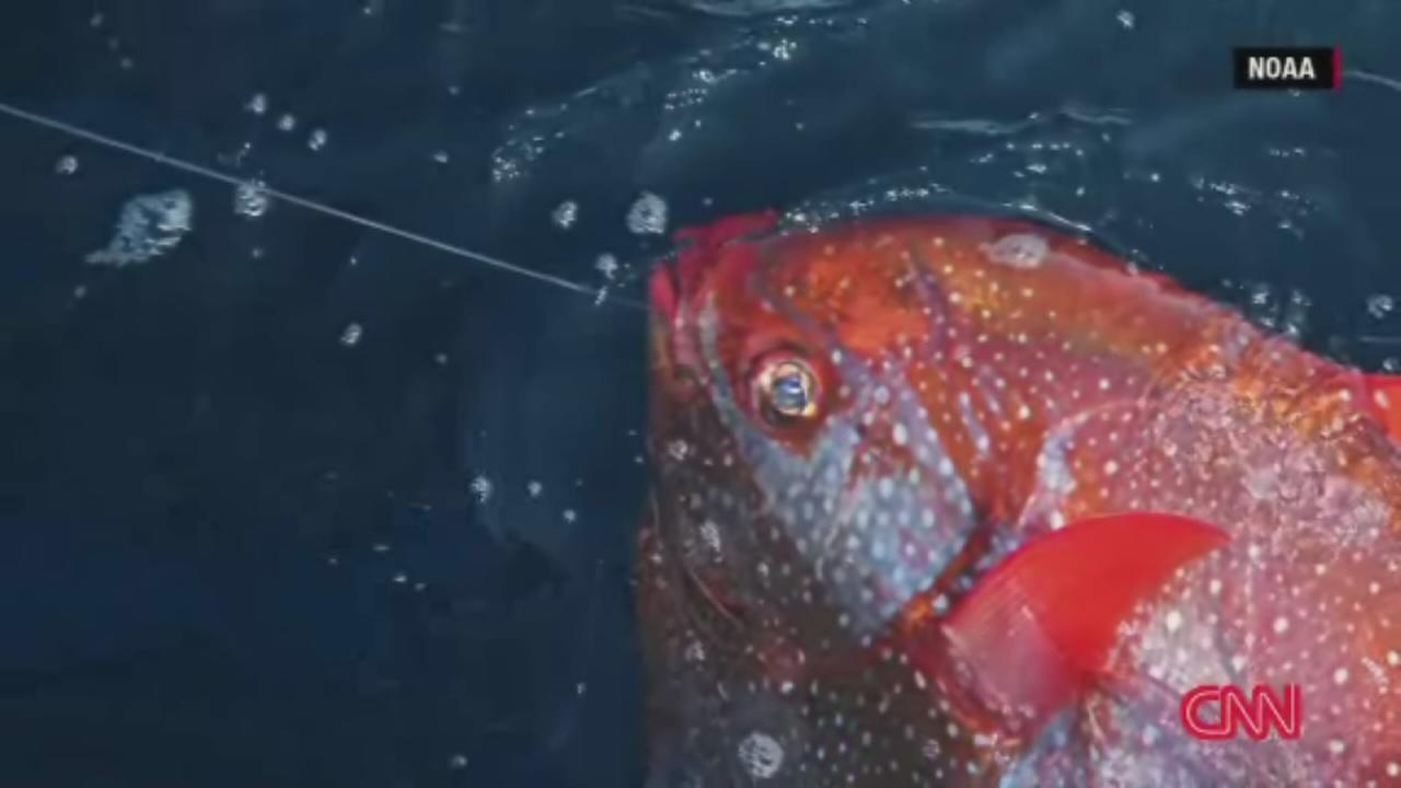 First warm-blooded fish discovered