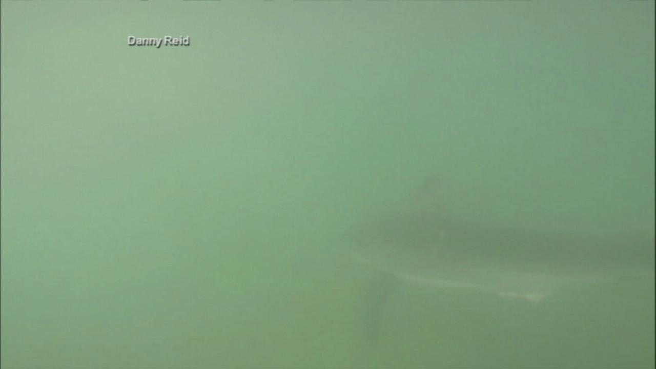 Paddleboarders close encounter with shark