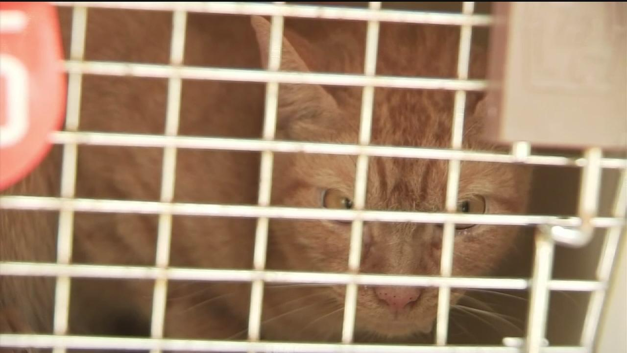 82 cats, 1 dog rescued from home