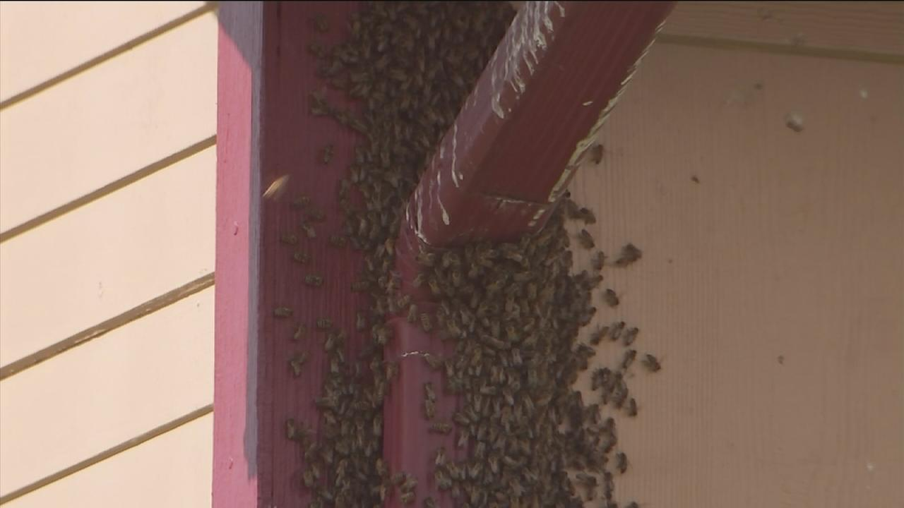 Swarm of bees moves into vacant home