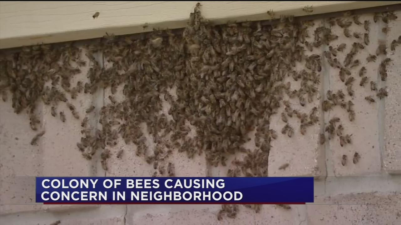 Aggressive bees invade home