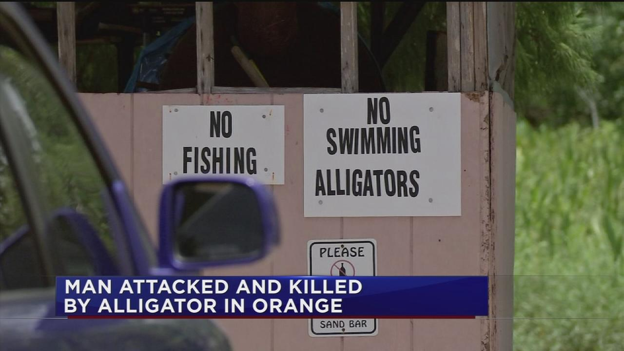 Witness horrified by deadly alligator attack