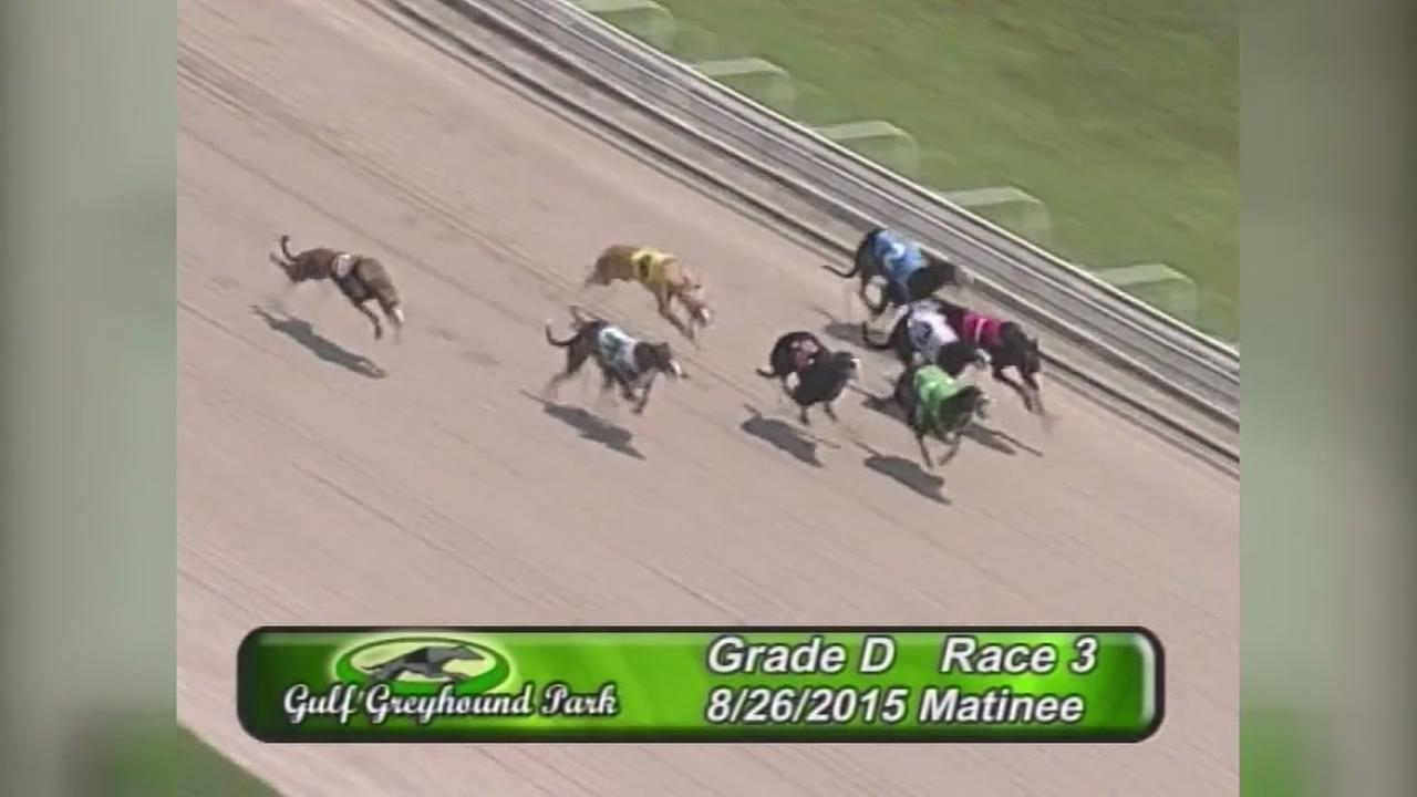 Racing is coming back to Gulf Greyhound Park and other tracks around the state.