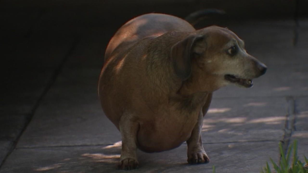 082815-ktrk-flint-barrett-fatdog-vid
