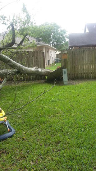 <div class='meta'><div class='origin-logo' data-origin='none'></div><span class='caption-text' data-credit='Photo/iWitness Reports'>The early morning storms sent this tree through a fence</span></div>