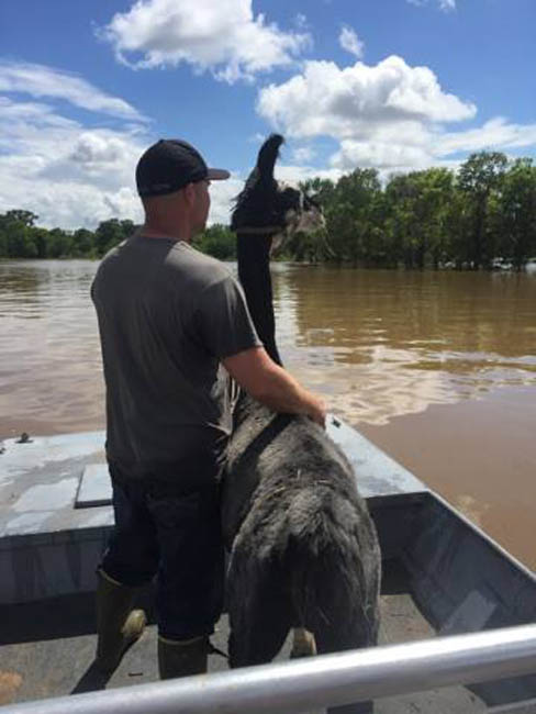<div class='meta'><div class='origin-logo' data-origin='none'></div><span class='caption-text' data-credit=''>Animal rescues in Holiday Lakes, Sunday, June 5.</span></div>