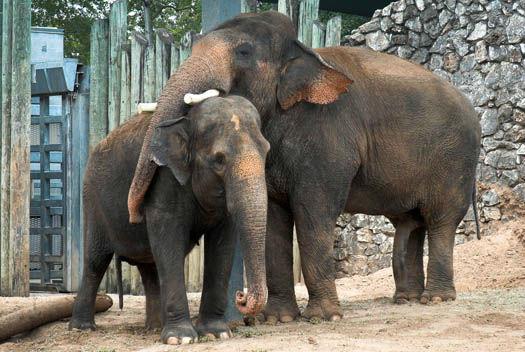 """<div class=""""meta image-caption""""><div class=""""origin-logo origin-image none""""><span>none</span></div><span class=""""caption-text"""">Elephant Mating (Stephanie Adams/Houston Zoo)</span></div>"""
