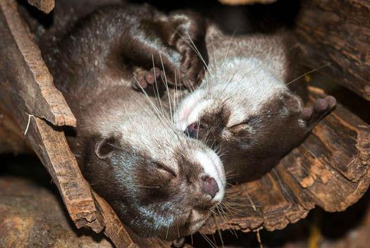 "<div class=""meta image-caption""><div class=""origin-logo origin-image none""><span>none</span></div><span class=""caption-text"">Asian Small-clawed Otter (Stephanie Adams/Houston Zoo)</span></div>"