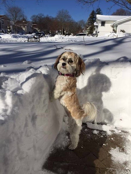 "<div class=""meta image-caption""><div class=""origin-logo origin-image wabc""><span>WABC</span></div><span class=""caption-text"">Tess is checking out the snow! Blizzard of 2016 (Amy Hirschhorn)</span></div>"