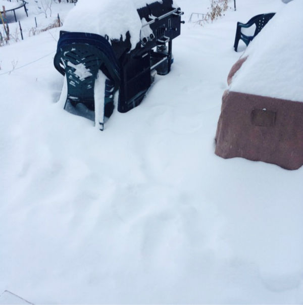 PHOTOS: Monday snowstorm across the New York area from ...