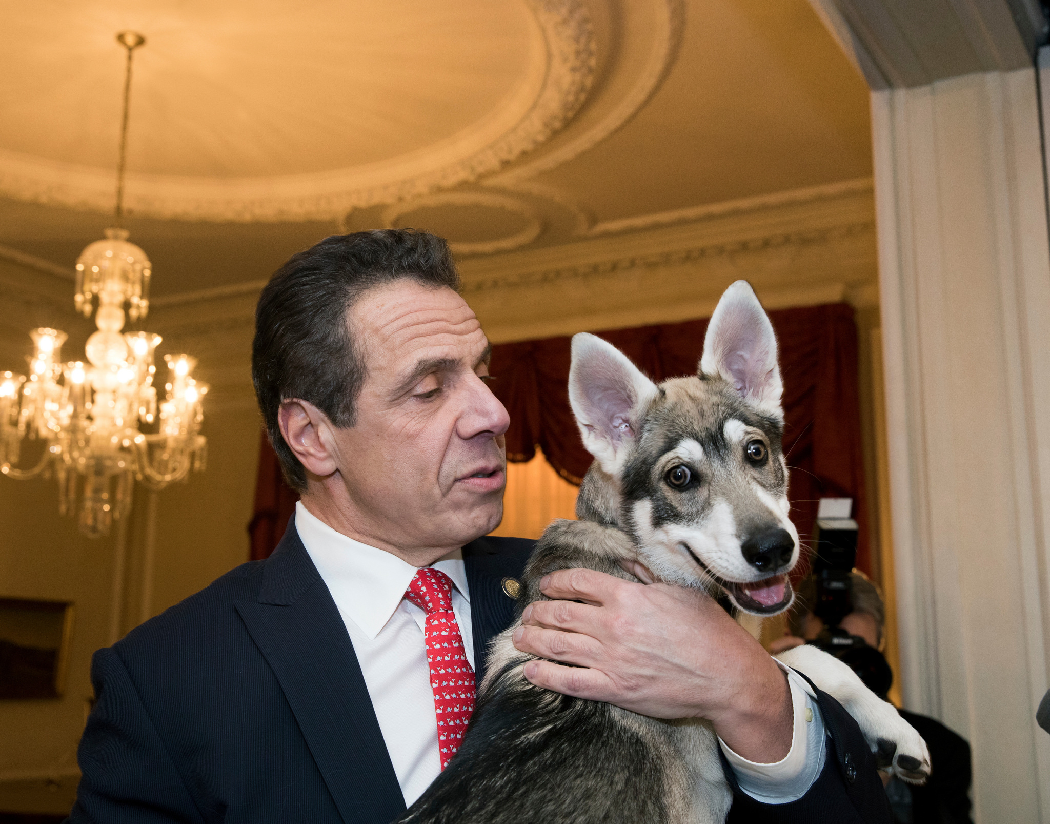 "<div class=""meta image-caption""><div class=""origin-logo origin-image wabc""><span>WABC</span></div><span class=""caption-text"">Governor Andrew Cuomo introduced Captain, a 14-week-old Siberian, Shephard and Malamute mix puppy.</span></div>"
